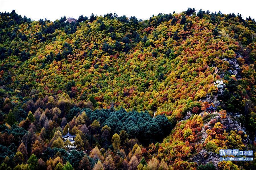 美しい秋風景!中国の伊春